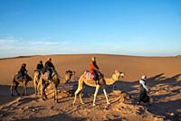 tourists riding camels in desert of Morocco