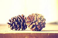 two pine cone on a wooden shelf christmas decoration colorful.