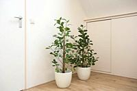 bright living room with two green houseplants , modern scandinavian design emty and clean.
