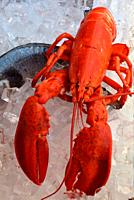 Seafood from the Adriatic Sea on a fish market on the Rialto bridge of Venice - Italy. .