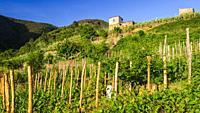 Vineyards and farm house, Corniglia, Cinque Terre, Liguria, Italy.