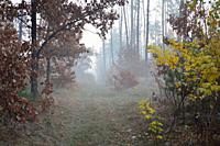 Morning fog and haze in the forest and village.