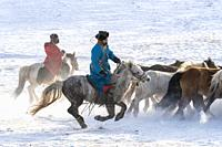 China, Inner Mongolia, Hebei Province, Zhangjiakou, Bashang Grassland, Mongolian horsemen lead a troop of horses running in a meadow covered by snow.