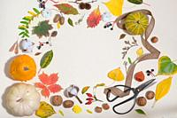 Autumn Colourful Leaves In Frame Isolated.