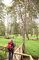 Trekking along Pinus Sylvestris forest near Checa, in Alto Tajo Natural Park, (Guadalajara Province, Castilla- La Mancha Region, Spain)