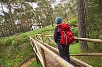 Woman with red backpack hiking along Pinus Sylvestris forest near Espineda Refuge in Checa, in Alto Tajo Natural Park, (Guadalajara Province, Castilla...