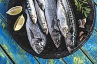 Raw fish. Sea bream, sea bass, mackerel and sardines. Blue wooden background.