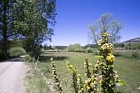 Spring flowers in meadow Teruel mountains Aragon Spain.