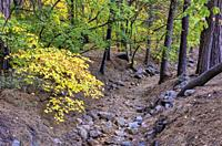 Fall Colors along Dry Stream Bed of Ahwahnee Hotel Yosemite National Park CA USA World Location.