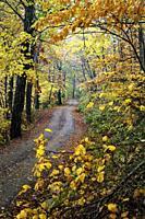 Winding road through vibrant fall foliage in Pisgah National Forest, Brevard, North Carolina, USA.