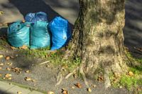 Oberhausen, Sterkrade, plastic bags at the roadside near a plane tree, binbags with autumn leaves, refuse management, trash removal, street cleaning, ...