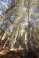 Trees. Los Ports de Beseit. Teruel province. Spain.