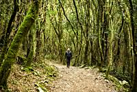 Medium age woman walking by the forest, Santoña, Cantabria, Spain, Europe.