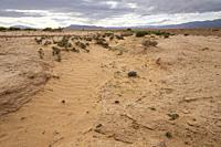 valle del Muluya. Atlas medio. Marruecos, Africa.