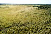Cogongrass used at Hardee County Park, Florida is an example of a returned phosphate mined ground or areas back to productive use through a process ca...