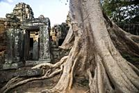 Bayan tree at the entrance of the Banteay Kdei temple in Angkor Wat, Siem Reap, Cambodia.