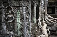 Ta Prohm temple in Angkor Wat, Siem Reap, Cambodia.