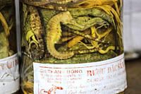 Traditional Vietnamese alcoholic beverages fermented and infused with marine animals. Vietnam, Southeast Asia.