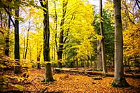 Colorful autumn forest, Philips de Jongh Park, Eindhoven, The Netherlands, Europe.