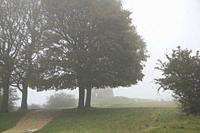 Looking over a Cotswold stone wall towards the historic Broadway Tower in a foggy morning, which sits high on the Cotswold escarpment at 1024 feet (31...