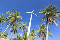 Wind turbine surrounded by palm trees, Koh Tao, Thailand.