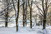 Trees in a snow-covered landscape. Urbasa-Andia Natural Park. Navarre, Spain, Europe.