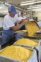 Auroraville, Wisconsin - Master cheesemaker Jon Metzig (left) and cheesemaker Orin Freeman make colby cheese at Union Star Cheese. Union Star is one o...