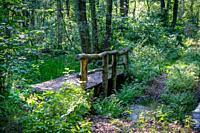 A wooden bridge crossing a small stream in a very lush green forest with rays of sunshine through the trees in nature reserve Zarth near Treuenbrietze...