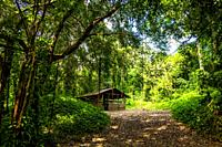 Little house in the tropical nature of Soroa, Republic of Cuba, Caribbean, Central America.