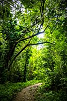 Tropical nature of Soroa, Republic of Cuba, Caribbean, Central America.