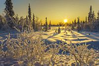 Winter landscape in direct light, nice warm color from afternoon light, snowy trees, Gällivare, Swedish Lapland, Sweden.