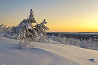 Winterlandscape at sunset, making the sky colorfull with nice warm color, Gällivare county, swedish Lapland, Sweden.