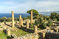 Säulen eines römischen Patrizierhaus in Tindari, Patti, Sizilien, Italien, Europa | Columns of a Roman residential building, Tindari, Patti, Sicily, I...