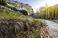 Autumn at the Pelegrina Path in Sweet River. Guadalajara. Spain. Europe.
