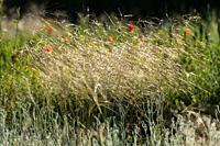 Flowers. Almansa, Albacete Province, Spain.