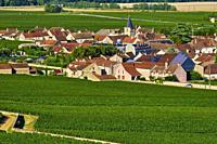 France, Burgundy, Côte d'Or, vineyard of Vosne Romané.