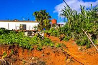 Farm in Topes de Collantes, Trinidad, Republic of Cuba, Caribbean, Central America.