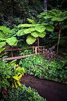 Jungle with bridge in Topes de Collantes, Trinidad, Republic of Cuba, Caribbean, Central America.