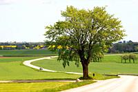 Landscape with tree and countryroad at Vemmenhög, Scania, Sweden.