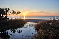 sunrise in puerto Banus at the beach with a palm tree over the sand and blue sky and river.