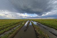 Flooded road after rain, Masai Mara National Reserve, Kenya, Africa.
