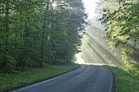 Road with sunbeams in the morning.