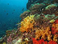 Ko Ha, a coral reef located in the Andaman Sea near Ko Lanta, Thailand. .
