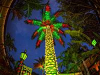 Christmas light decorationed palm tree in the Brick Yard Plaza in Venice Florida.