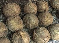 Zanzibar. Coconuts on sale in the covered market.