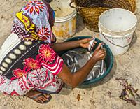 Zanzibar. Young girl cleans fish freshly off-loaded from the fishing boats at the beach.