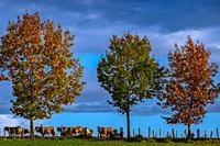 France, Auvergne, Cantal, autumn near Quezac.