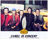 Camel in concert, 1981 Madrid, Musical concert poster.