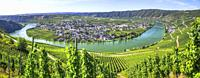 bend of the Moselle river at Piesport at the right, Germany, panorama from above, natural monument Moselloreley background right side.