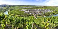 bend of the Moselle river around Trittenheim, Germany, panorama from above near Zummethöhe.